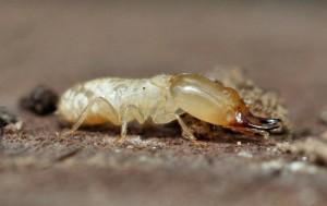 Tampa Termite Control