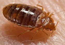 Tampa Bed Bug Treatments