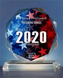 best-of-tampa-2020-award